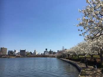 水戸千波湖.jpg