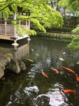 荻窪 大田黒公園.jpg
