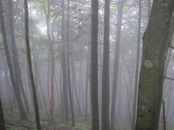 霧の丹沢-3.jpg